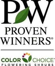 """Arctic Fire™ Cornus stolonifera- Farrow - Redtwig Dogwood -Proven Winner-4"""" Pot"""