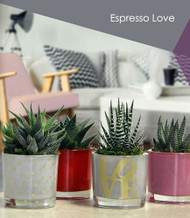 "Love Espresso Glass Planter with Live Plant - 2 x 2 x 4.75"" - Gold - Live Trends"