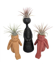Thoughts of Family - 3 Ceramic Vases with Live Air Plants - Live Trends
