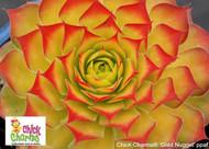 "Gold Nugget Hens & Chicks - Sempervivum - Indoors/Out - 3"" Pot - Chick Charms"