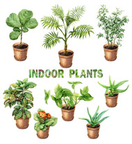 https://d3d71ba2asa5oz.cloudfront.net/12001418/images/indoorplants.jpg?refresh