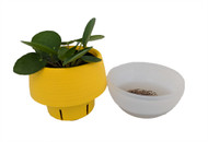 "Chinese Money Plant - Pilea peperomioides in 3"" Yellow Self Watering Plant Pod"