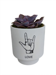I Love You Sign Language Planter with Live Succulent Plant - ASL - Live Trends