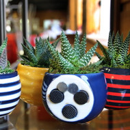 "Magnetized Nordic Planter/Live Succulent Plant - 3"" x 5"" - Striped - Live Trends"
