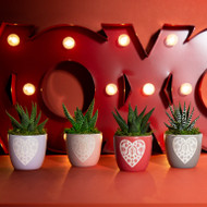 Lace Heart Porcelain Planter with Live Succulent Plant - LightGray - Live Trends