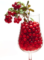 "Red Pearl Lingonberry - High in Anti-oxidants - 3.25"" Pot - Fresh Aroma"