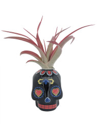 "Black Sugar Skull Ceramic Planter with Live Tillandsia Air Plant - 3"" x 3"""