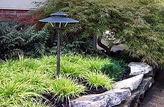 Golden Dwarf Sweet Flag Plant Acorus Terrarium Fairygarden