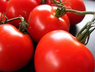 Creole Tomato 4 Plants - Louisiana Heirloom - Some Like It Hot
