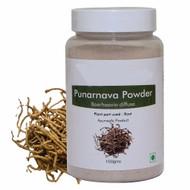 """Rare Punarnava Spiderling Medicinal Herb Plant - Boehavia diffusa - 4"""" Pot"""