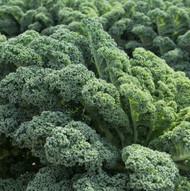 Prizm Kale - NEW - Hardy - 2 Pack