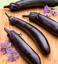 Classic Slender Eggplant - 2 Plants - Nutritious!