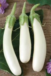 """Gretel Eggplant - 3.5"""" Pot - White Elongated Fruit"""
