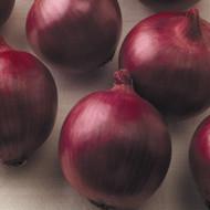 "Yellow Sweet Spanish Onion Plant - 3.5"" Pot"