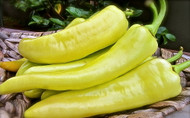 Sweet Banana Pepper - 2 Plants - Heirloom