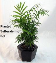 """Self Watering Glazed Ceramic Pot - Brown - 6 3/8"""" x 5 1/2"""""""