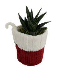 Santa's Sweater Planter with Live Succulent Plant - Live Trends