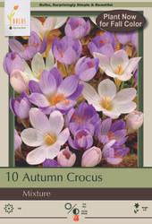 Fall Flowering Crocus Mix - 10 Bulbs - 6/+ cm