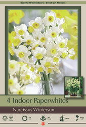 Wintersun Paperwhite Narcissus - 4 Bulbs - 15/16 cm Bulbs - Indoor/Very Fragrant