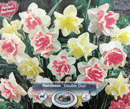 Double Duo Daffodil 15 Bulbs - Replete & White Lion - 12/14 cm Bulbs