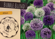 Bubble Blend Allium - 15 Bulbs - Schubertii - NEW - 12/14+ cm Bulbs