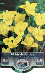 Danford Rockgarden Yellow Specie Iris - 20 Bulbs 5/+ cm - Very Hardy!