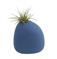 "Blue Serenity Stone with Living Air Plant -  4"" x 4"" x 4"""