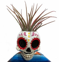 "Day of the Dead Skeleton Planter + Live Tillandsia Air Plant - 5""x3.5"" - Rainbow"