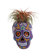 "Fancy Purple Sugar Skull Planter with Live Tillandsia Air Plant - 3"" x 3"""