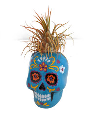 "Fancy Blue Sugar Skull Planter with Live Tillandsia Air Plant - 3"" x 3"""