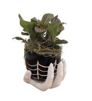 "Haunted Hand Planter with Live Pink Nerve Plant (Fittonia) & Spanish Moss -4""x4"""