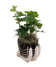 "Haunted Hand Planter with Live English Ivy Plant & Spanish Moss - 4"" x 4"""