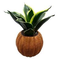 "Glittering Pumpkin Planter + Live Birdnest Snake Plant - 3"" - Easy to Grow"