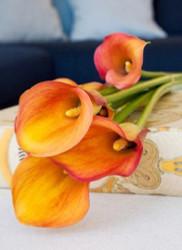 Cancun Calla Lily Bulb 14/16cm - Tropical Orange