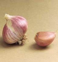 3+ ounces Musik Garlic Bulbs -Strong Flavor- SALE*