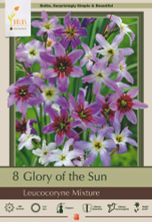 Leucocoryne - Glory of the Sun Mix - 8 Bulbs 5/+ cm