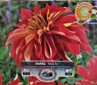 Nick Sr. Dinner Plate Dahlia - #1 Size Root Clump - Red/White/Gold