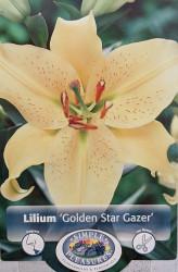Golden Stargazer Oriental Lily 2 Bulbs 16/18 cm - Buttery Yellow!