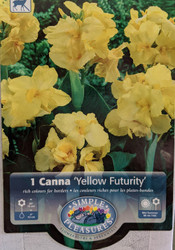 Dwarf Yellow Futurity Canna - 1 Rhizome - 2/3 eyes