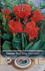 Red King Humbert Canna Rhizome - 2/3 eyes - Bronze Foliage
