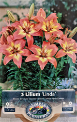 Linda Asiatic Lily 3 Bulbs 14/16cm - Red & Bright Yellow & Green