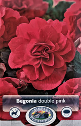 Double Pink Begonia - 2 Bulbs - 5/6cm
