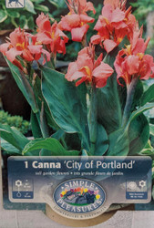 City of Portland Canna Rhizome - 2/3 eyes