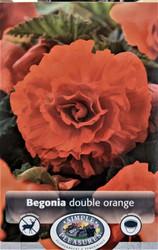 Double Orange Begonia - 2 Bulbs 5/6 cm