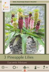 Pineapple Lily Mix - 3 Bulbs 16/+ cm - Eucomis