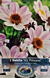 HS Princess Dark Leaf Dahlia - 1 Bulb Clump