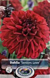Senor's Love Decorative Dahlia - Fierce Red - #1 Size Root Clump - New