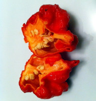 Carolina Reaper Pepper - 3 Live Plants - Hottest Pepper in the Universe