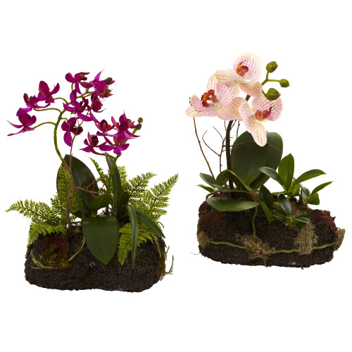 """Multicolor Orchid Island (Set of 2) - 10"""""""