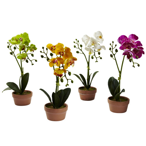 """Multicolor Phalaenopsis Orchid w/Clay Vase (Set of 4) - 13"""""""